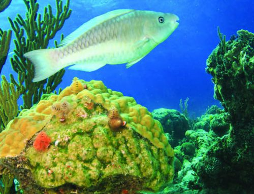 Bahamas Coral Reef Report Card 2016
