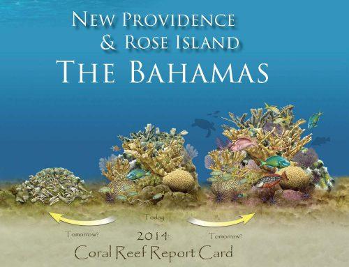 2014 Bahamas Coral Reef Report Card