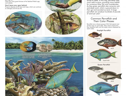 Protect Our Parrotfish Poster