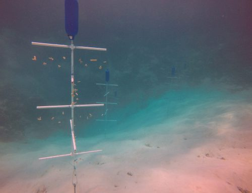 The Reef Rescue Network Creates The World's First Blue Hole Coral Nursery!